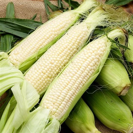Fresh/ Frozen Maize